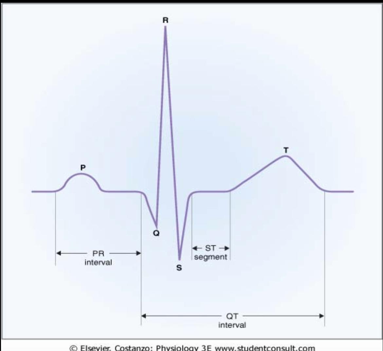Physiology l17 ekg i physiology unit 2 flashcards memorang normal ekg pooptronica Images