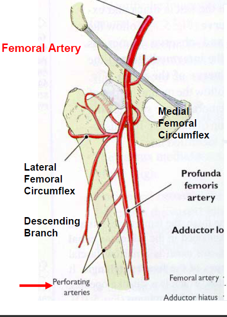 heart and right femoral artery Hearth cath log in log in the patient was subsequently brought to the cardiac catheterization lab for left heart the right common femoral artery is a.