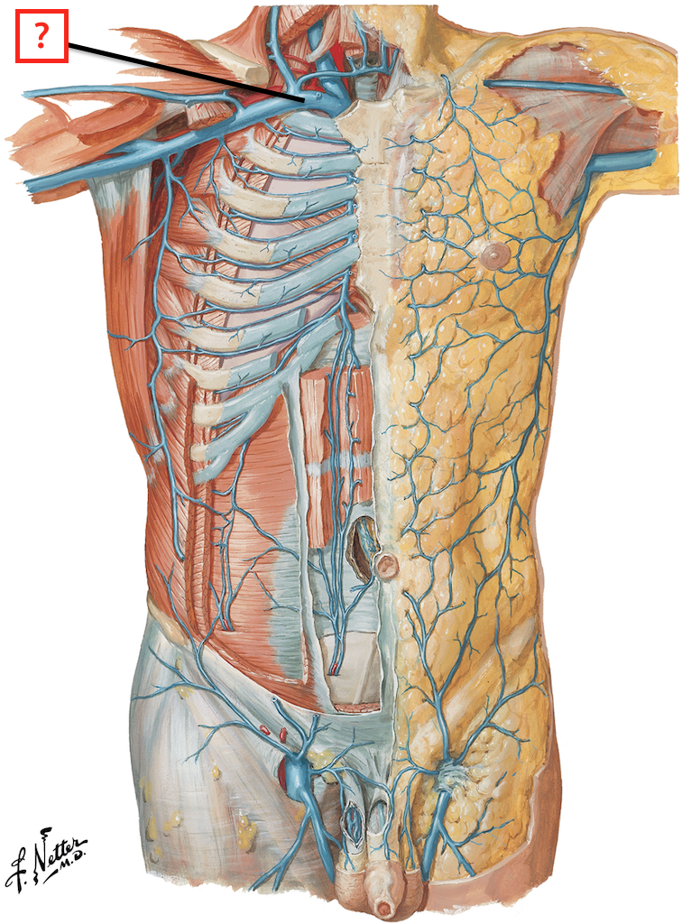 Veins Of Thorax And Anterior Abdominal Wall Flashcards Memorang