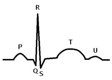 Wiggers diagram cardiac cycle and jugular venous pulse flashcards wiggers diagram cardiac cycle and jugular venous pulse flashcards memorang ccuart Images