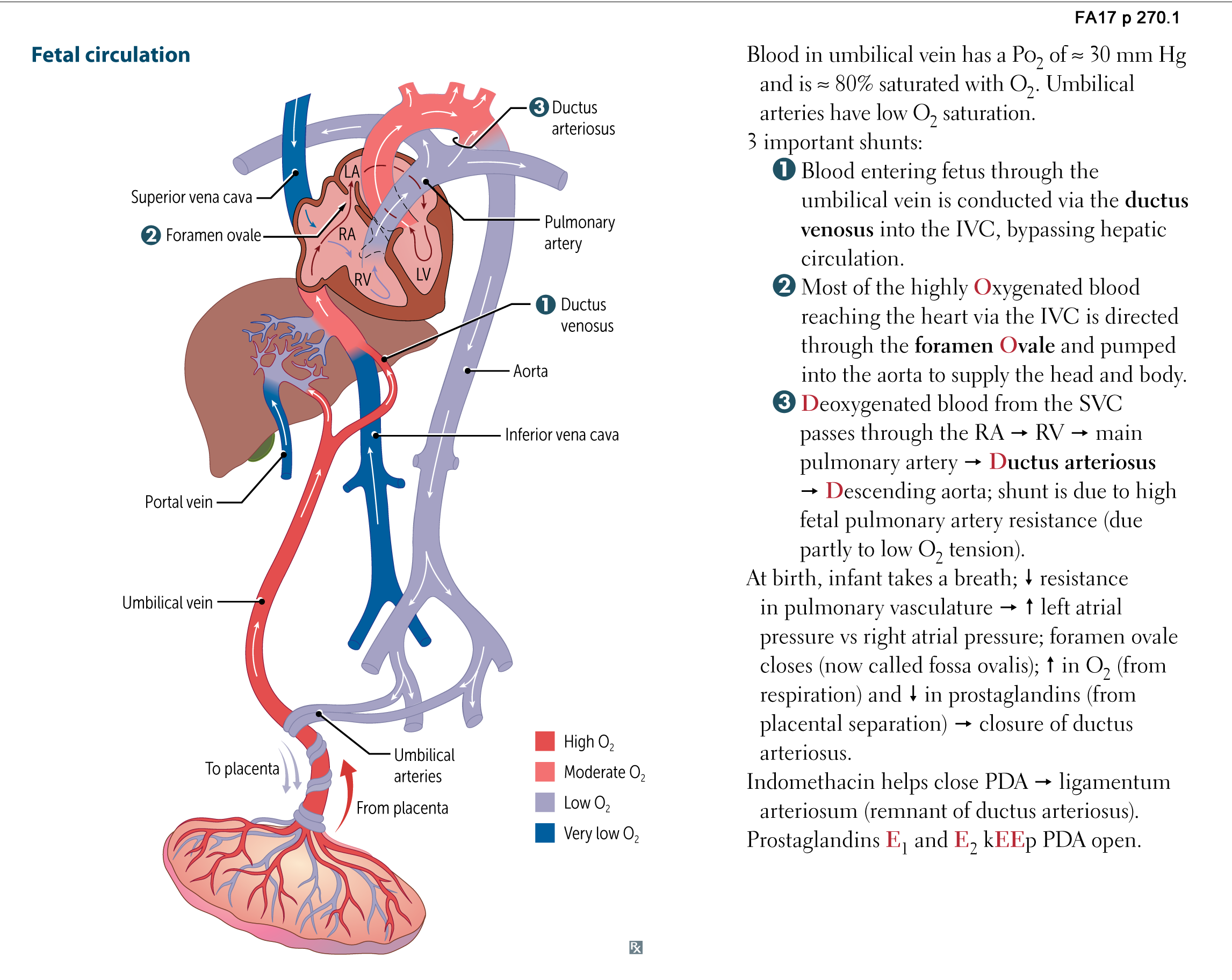 Cardiovascular Embryology - Fetal circulation Flashcards | Memorang