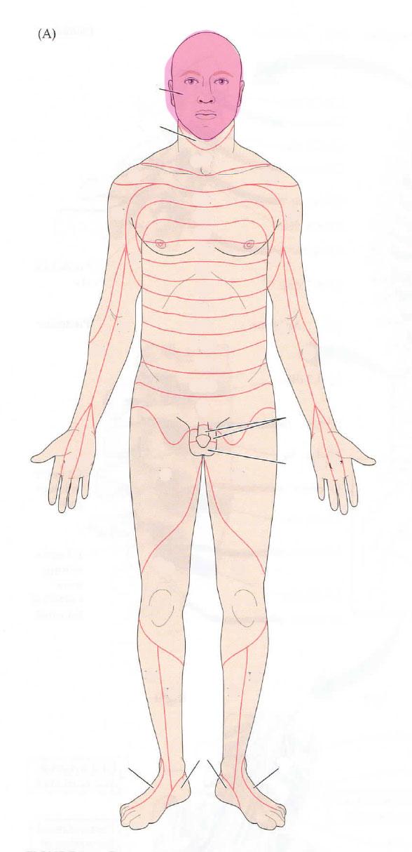 Dermatomes Anatomy Flashcards Memorang