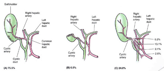 Webb ct biliary tree and gallbladder flashcards memorang ccuart Choice Image