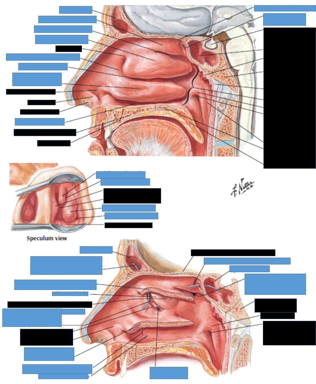 Gross Anatomy Lab Unit 6 (Gross Anatomy Unit 6) Flashcards | Memorang