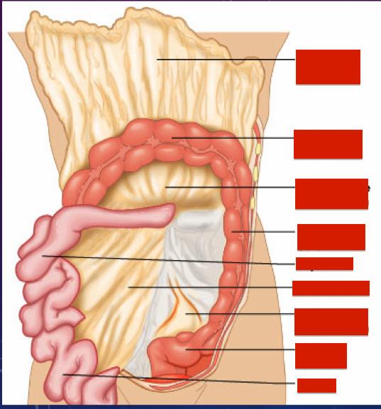 Lower Gi Anatomy Lower Gi Flashcards Memorang