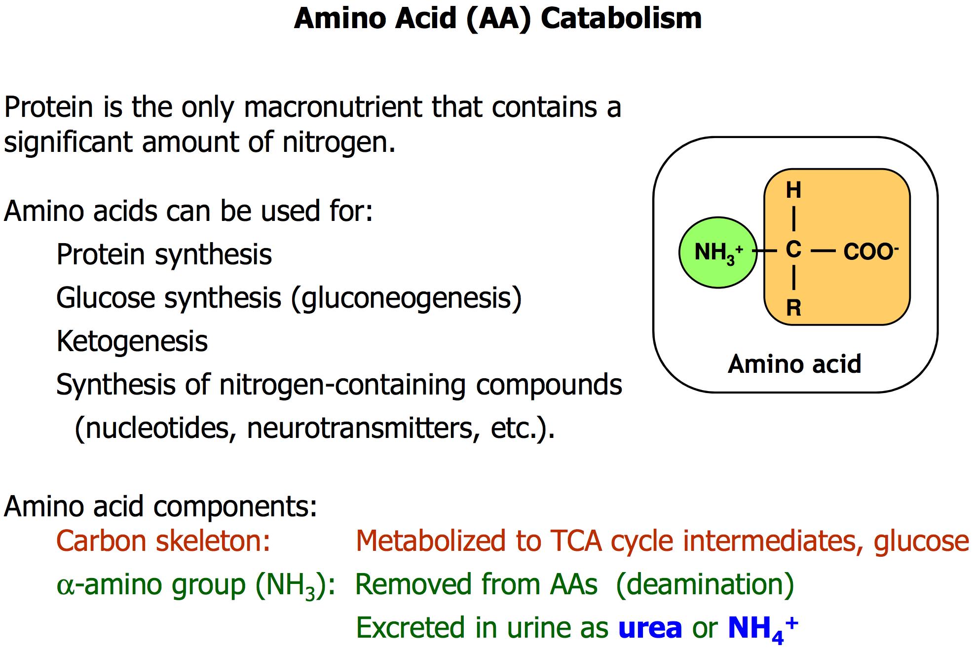 GS L43/44 Amino Acid Catabolism I & II (GS BIOCHEM E4 ...