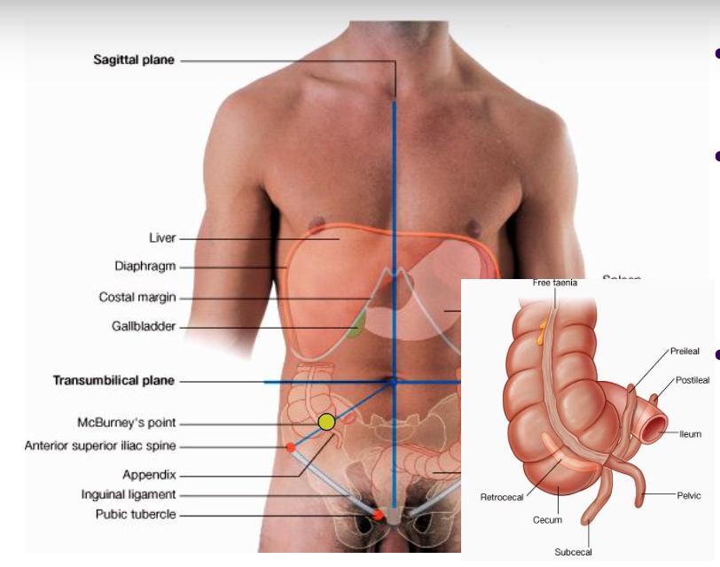 Fantastic Iliac Spine Anatomy Mold - Anatomy And Physiology Biology ...