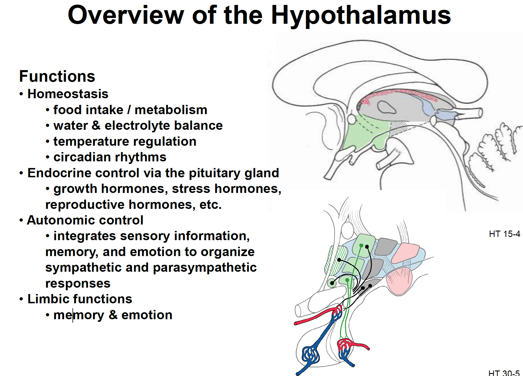 Neuroscience L50 Hypothalamus Part I (Anatomy/Blood Supply ...