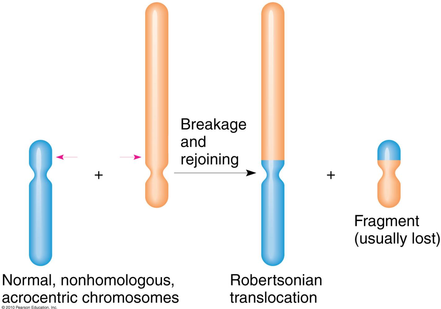 linkage disequilibrium usmle