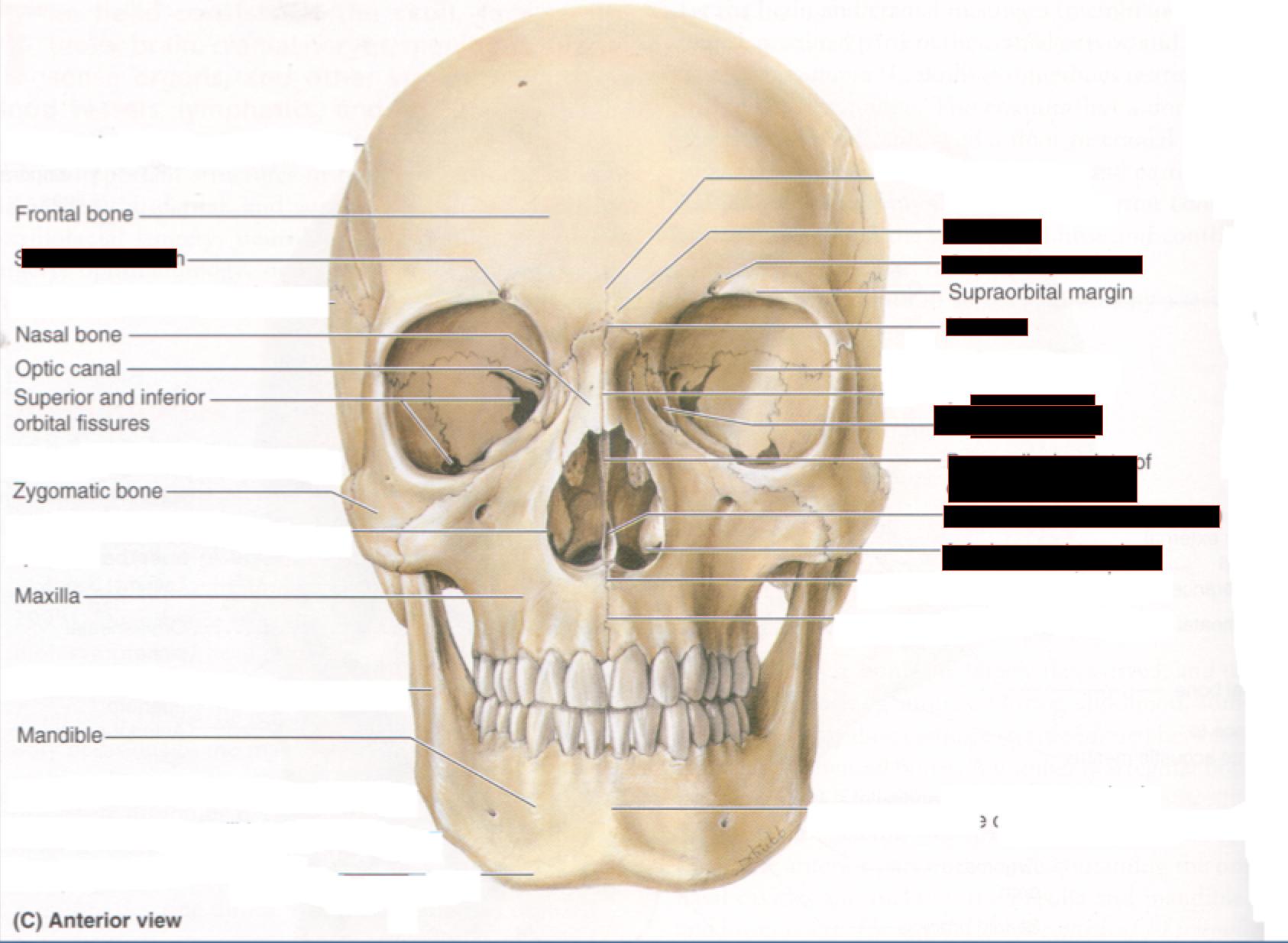 Anatomy Superficial Face (Block 5) Flashcards | Memorang