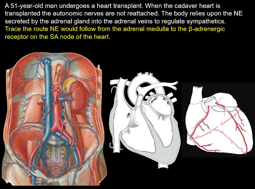 Week 8 Retroperitonial practice (Anatomy) Flashcards | Memorang