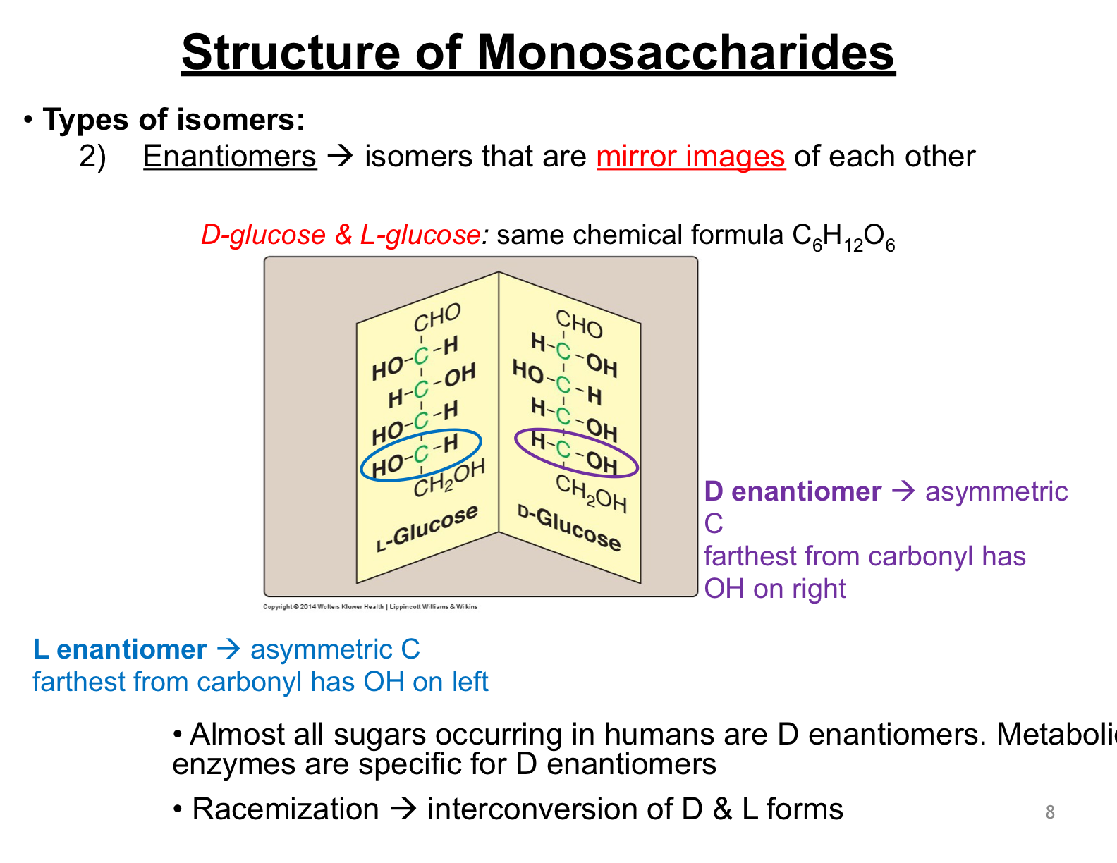 Lecture 14 Carbohyrates Carbohydrates Flashcards Memorang