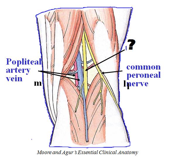 Hip And Thigh Anatomy Boundaries And Neurovasculature Block 4