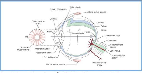 Visual Pathways Anatomy And Lesions Cns Flashcards Memorang