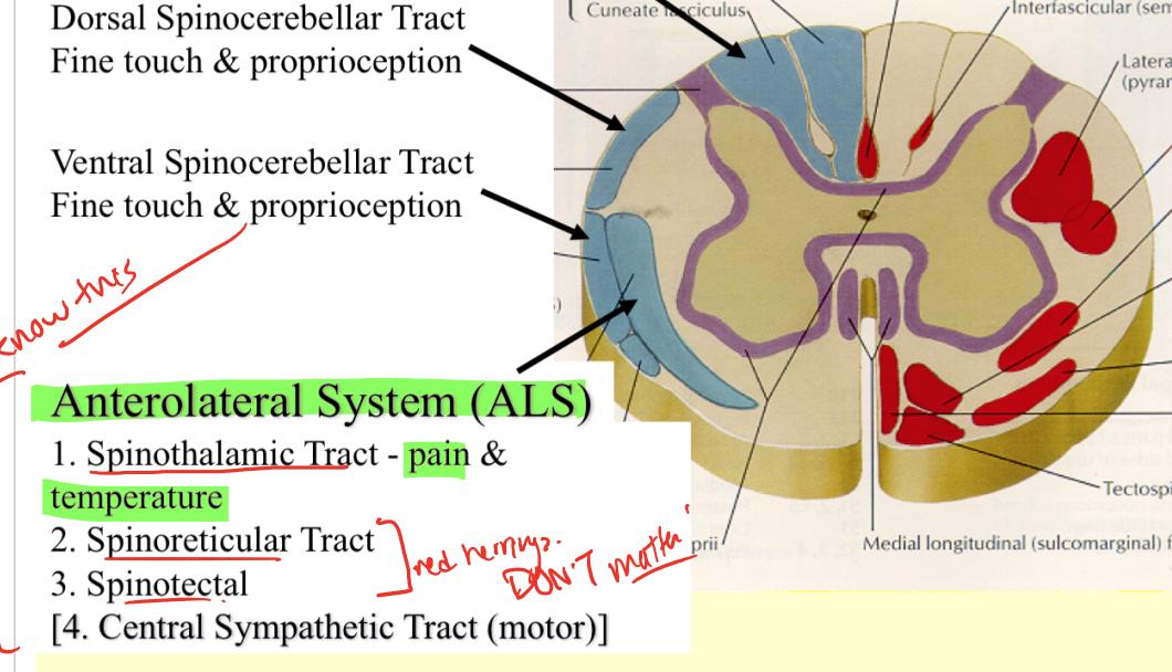 Neuro Quiz 2 (Spinal Cord Sensory Tracts) Flashcards | Memorang