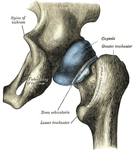Bone Markings Anatomy Flashcards Memorang