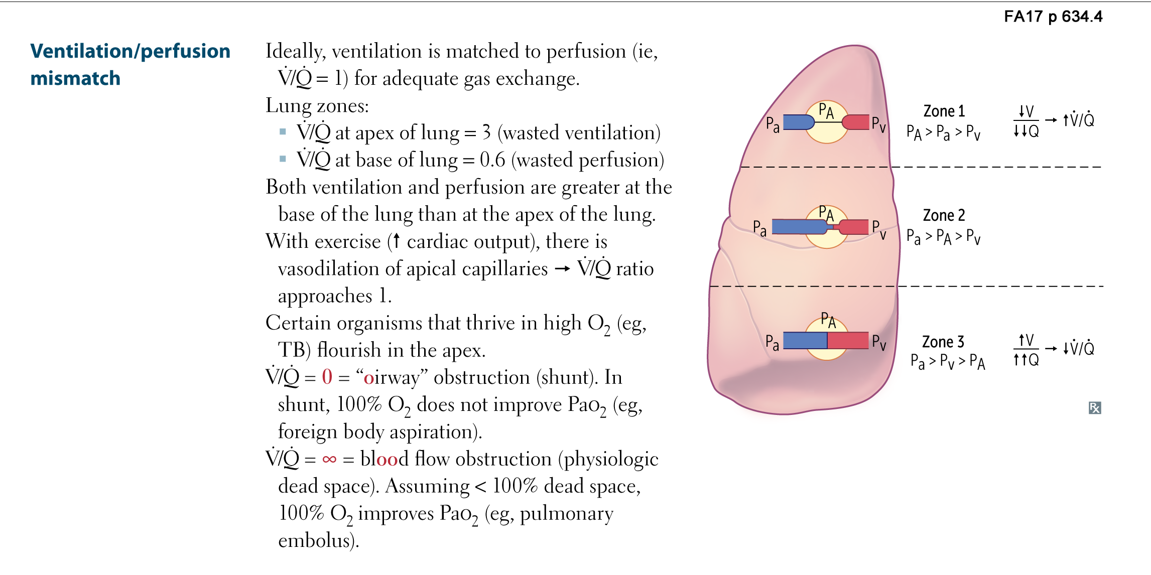 respiratory physiology - ventilation / perfusion mismatch flashcards