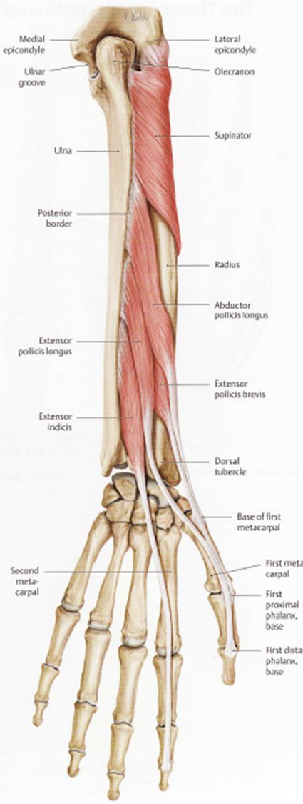 Wrist And Elbow Omm Flashcards Memorang
