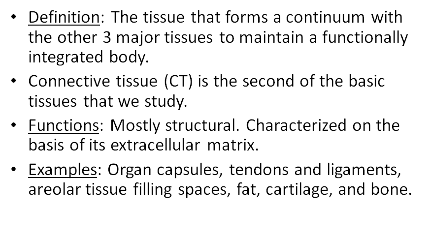 Connective Tissue L2 Microscopic Anatomy Flashcards Memorang