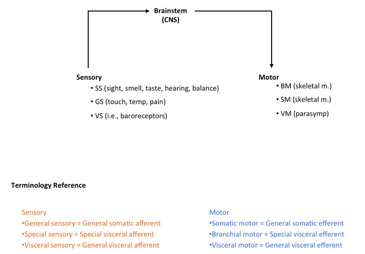 Week 12 - Cranial Nerves Overview, Head Autonomics (Anatomy) (Phase ...