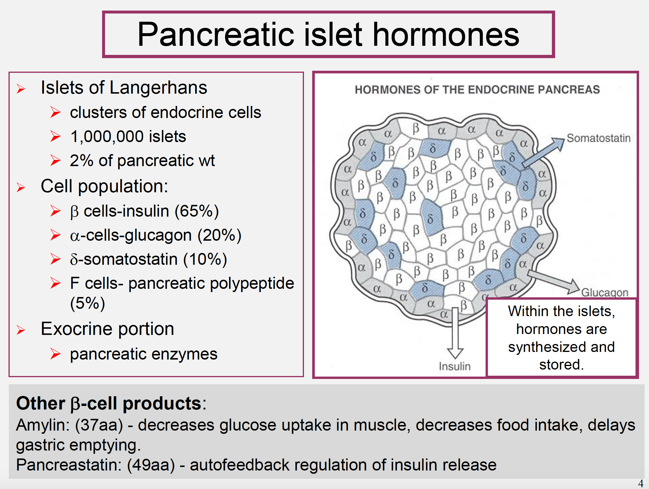 Physiology L36 Endocrine Pancreas Function Physiology Unit 8