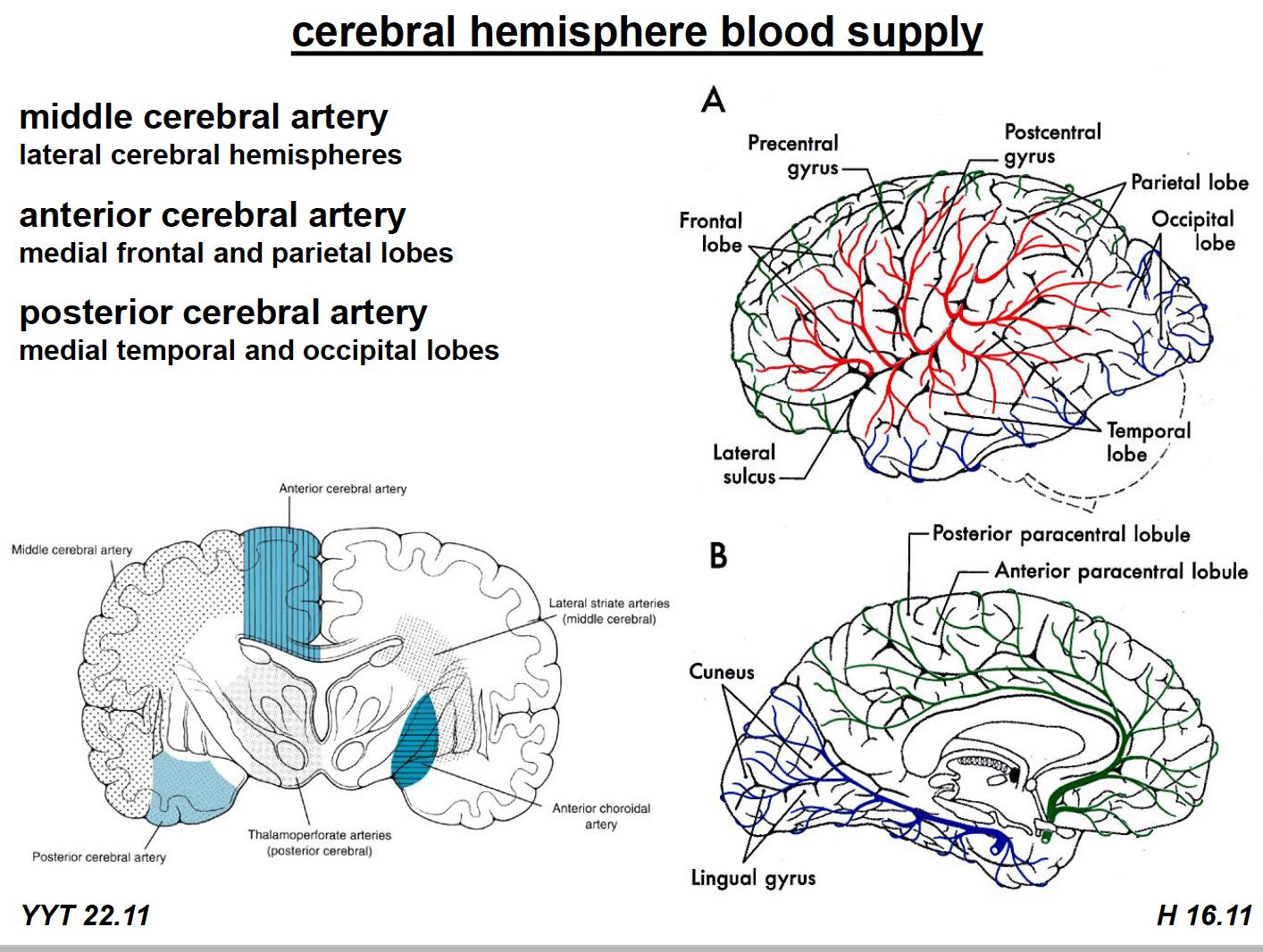 Neuroscience L64 Stroke Review (Neuroscience Unit 8 ) Flashcards ...