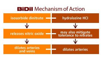 Hydralazine/Nitrate (ISDN/HYDRAL) Flashcards | Memorang
