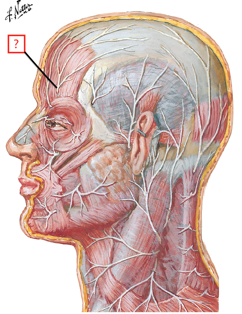 Cutaneous Nerves Of Head And Neck Flashcards Memorang