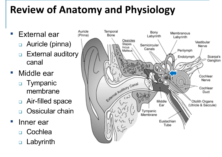 4 8 diseases of the ear hearing loss moberly neuro flashcards review of ear anatomy ccuart Choice Image