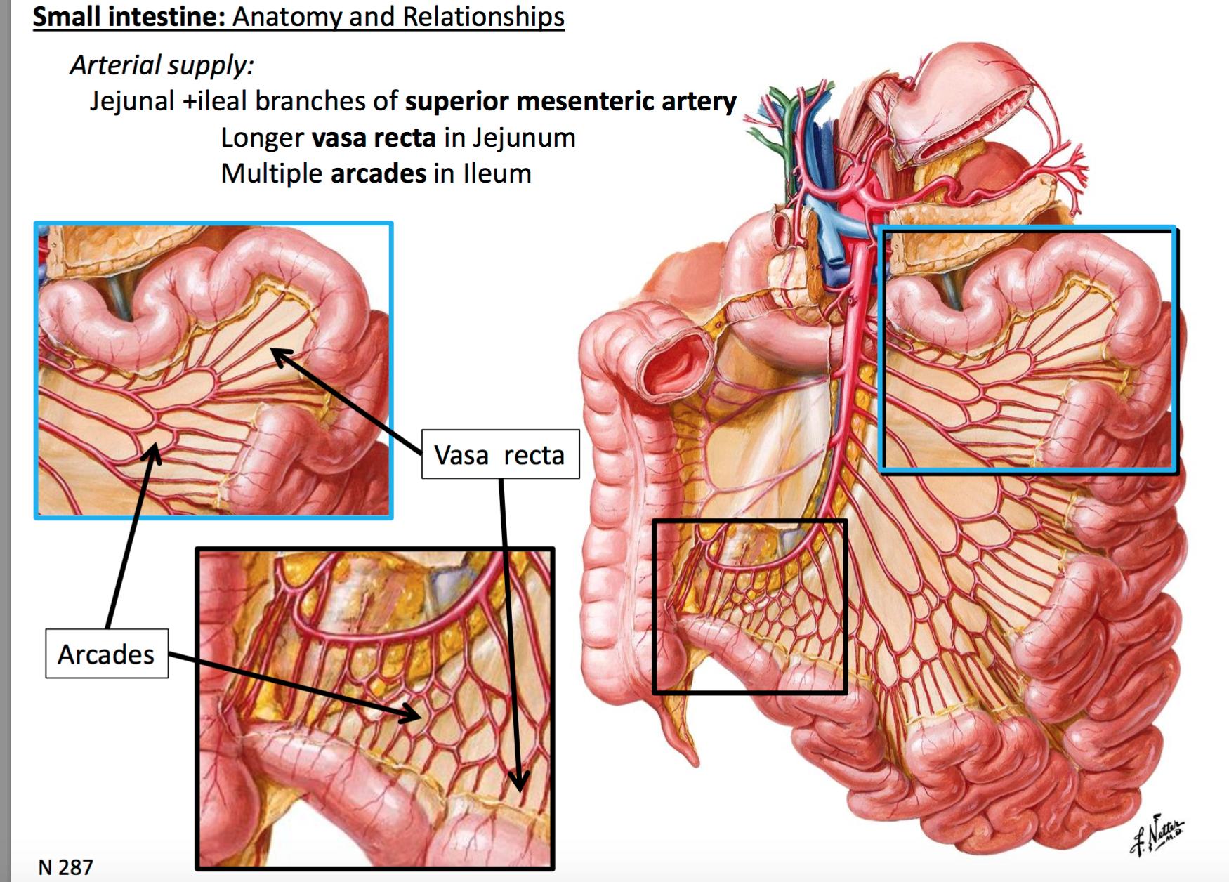 Gsanatomy G31 Midgut Hindgut Anatomy Unit 4 Flashcards Memorang