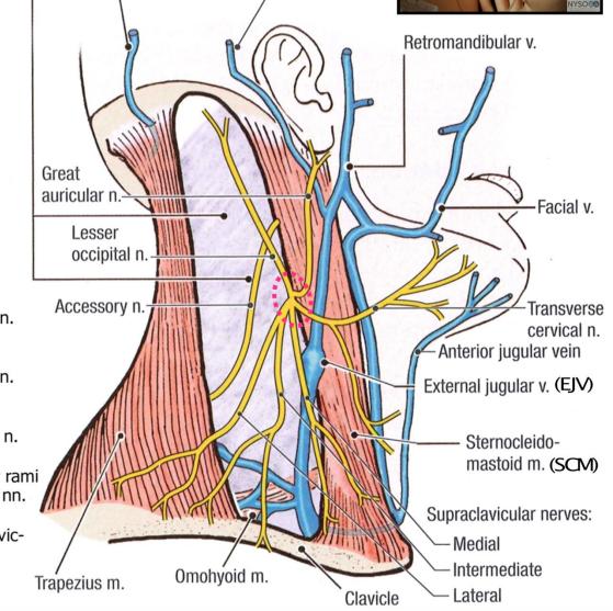 Anatomy Breast Pectoral Region Posterior Triangle Breast