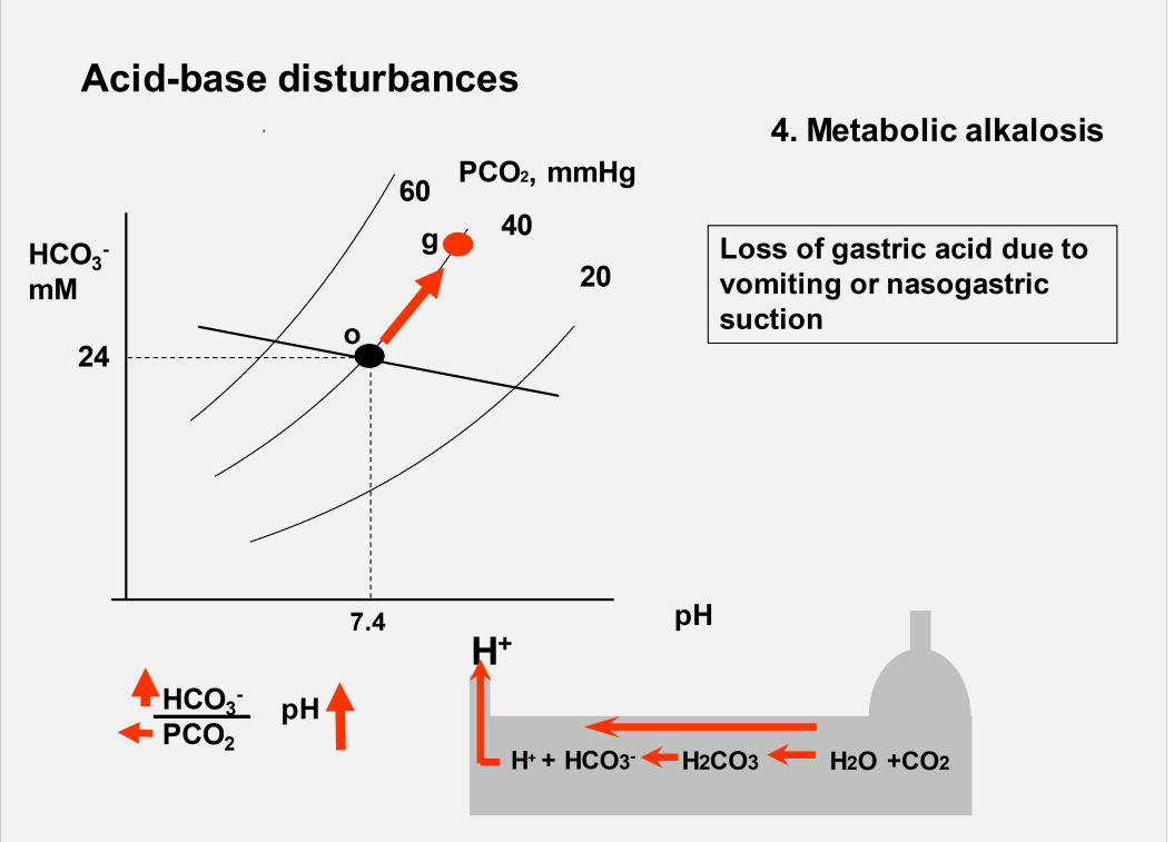 Acid base balance week 5 flashcards memorang what change would you see in a davenport diagram during metabolic alkalosis without compensation ccuart Images