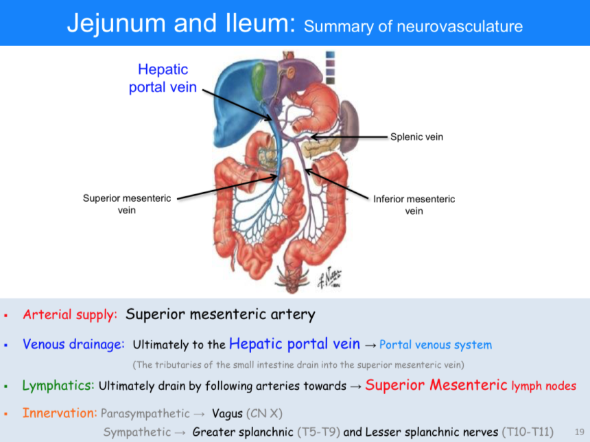 Anatomy Of Portal Venous System Choice Image - human body anatomy