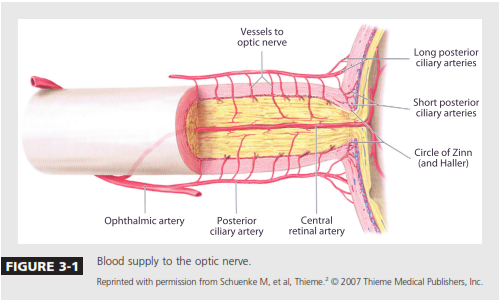 Magnificent Central Retinal Vein Anatomy Component - Anatomy And ...
