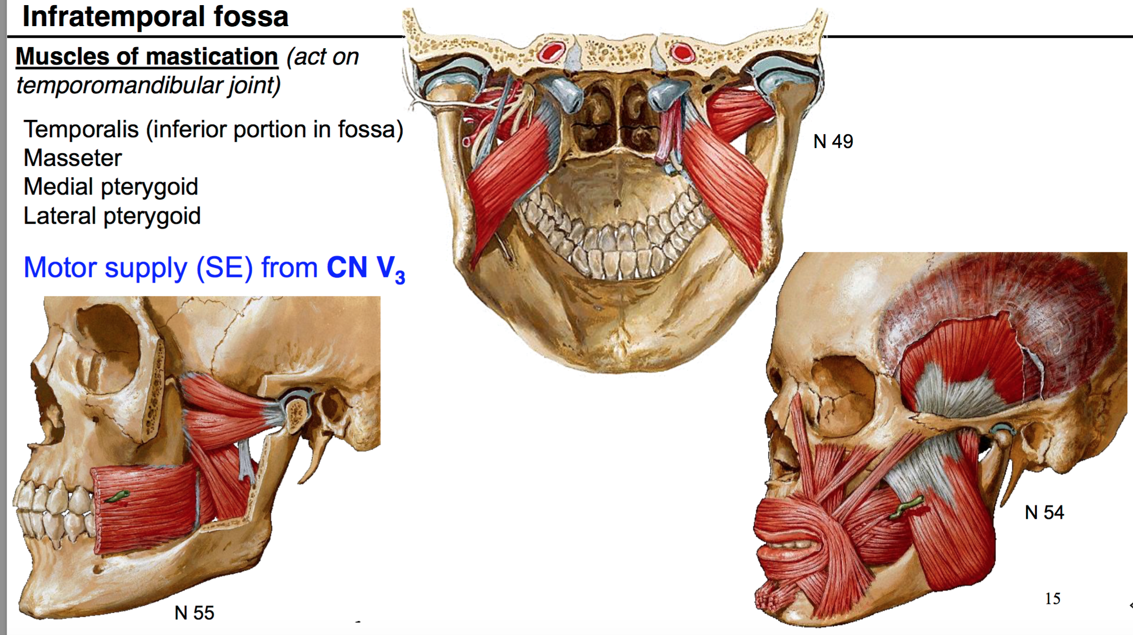 30. Anatomy G60 Temporal Fossa and Infratemporal fossa Flashcards ...