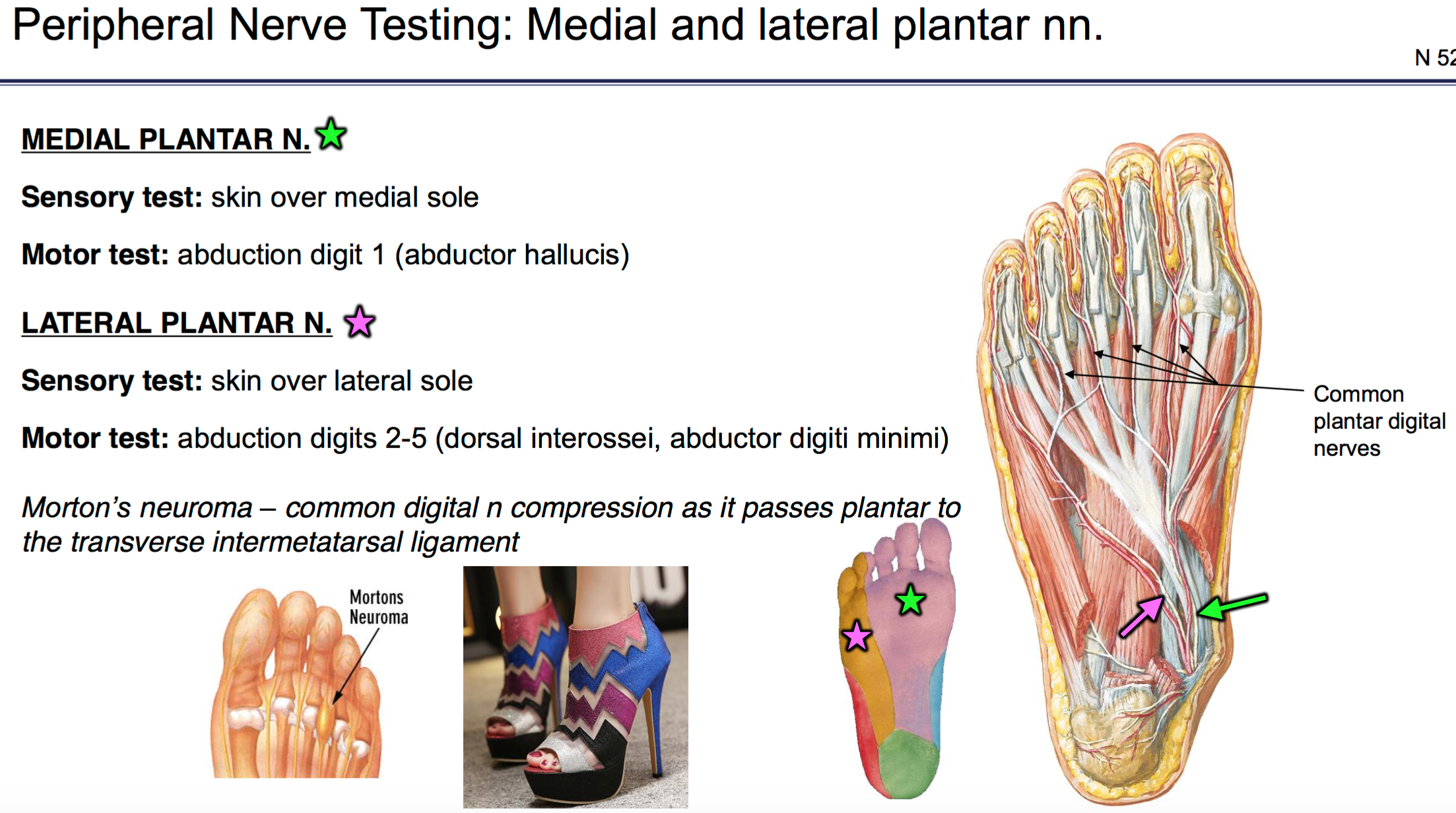 FG Anatomy G50 Nerve Lesions of the Lower Extremity (Anatomy Unit 6 ...
