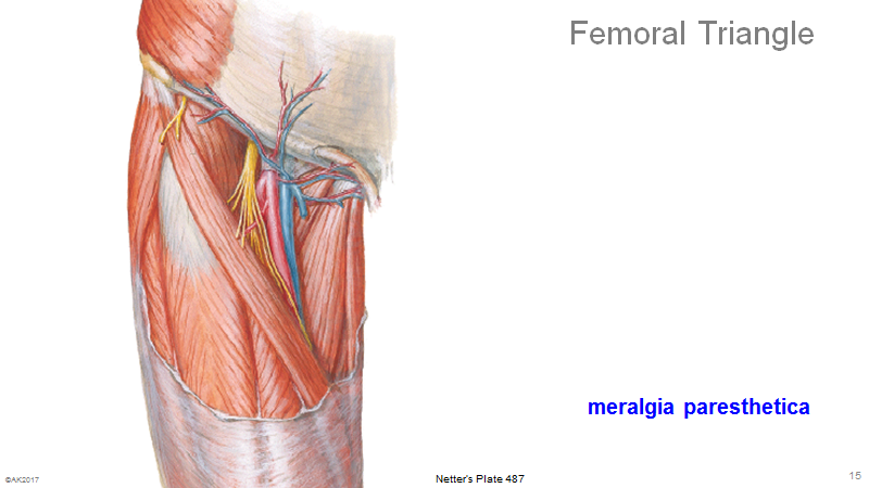 Exelent Anatomy Of The Femoral Triangle Composition Anatomy And