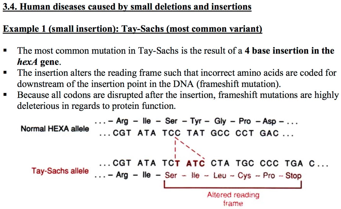 CCF L1 POLYMORPHISMS AND GENETIC MUTATIONS (BIOCG EXAM W1 ...