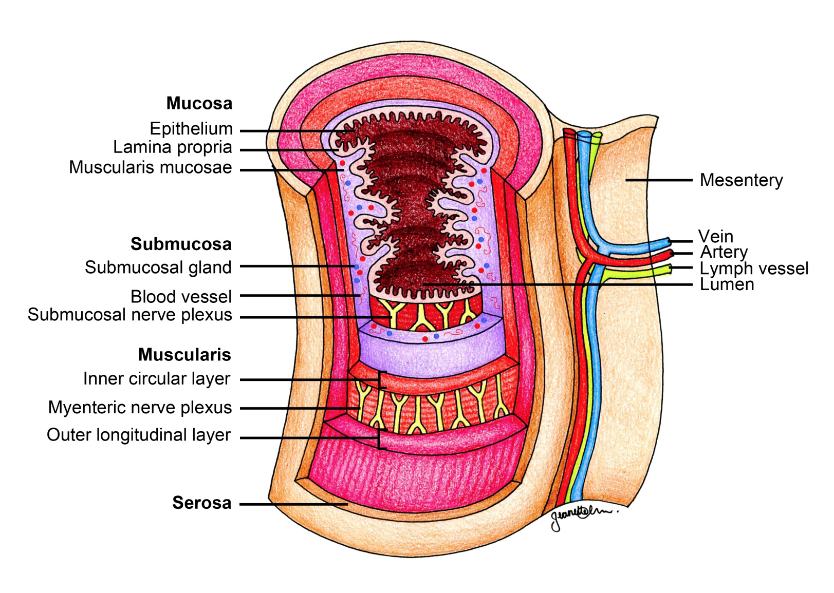 iROCKET Learning Module: Upper Gastrointestinal Tract