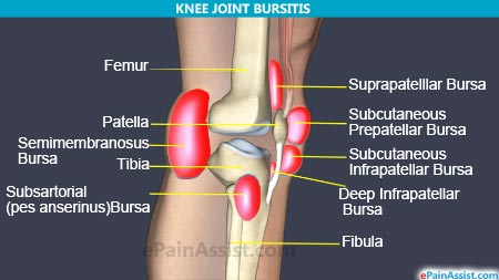 Bursa knee diagram anterior search for wiring diagrams 012b knee joint anatomy flashcards memorang rh memorangapp com infrapatellar bursa x ray anterior knee bursa ccuart Gallery
