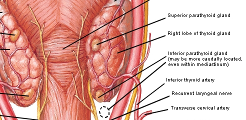 Unit 3 Clinical Correlates Anatomy 2 Flashcards Memorang