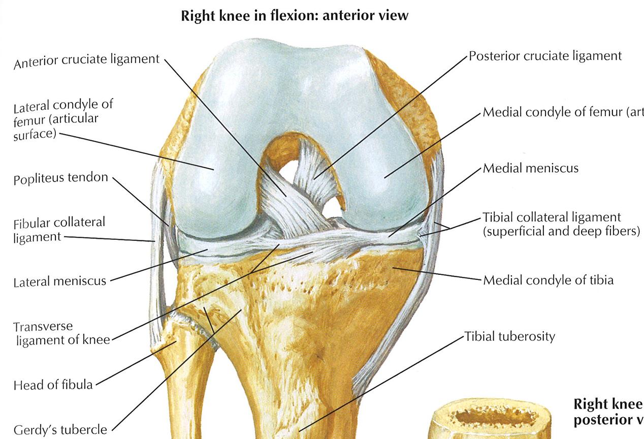 Wunderbar Nnh Anatomie Fotos - Menschliche Anatomie Bilder ...
