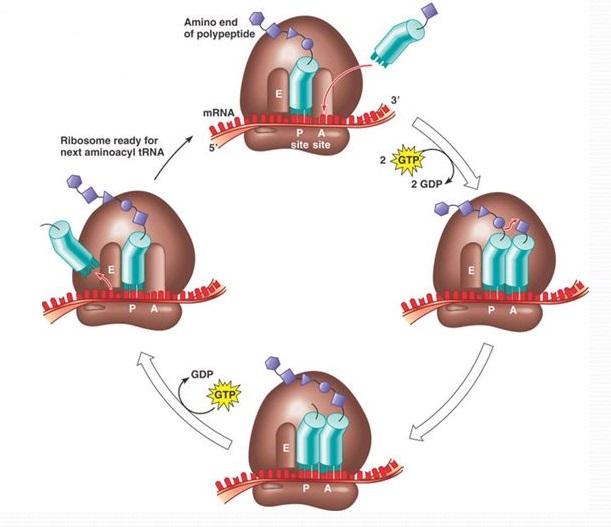 The Genetic Code And Rna Translation Mcat 2018 Biochemistry