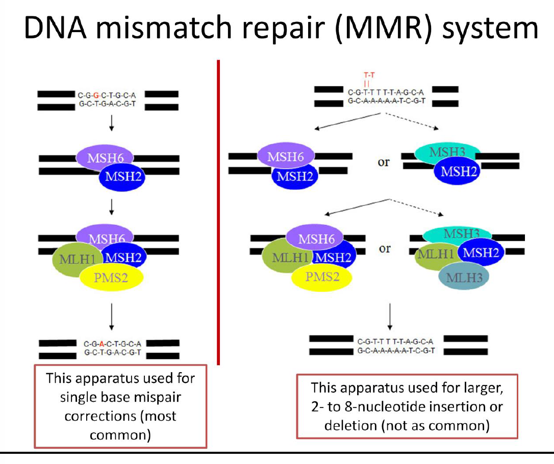 Molecular Pathology Of Colorectal Cancer 6 2 Gi Flashcards Memorang