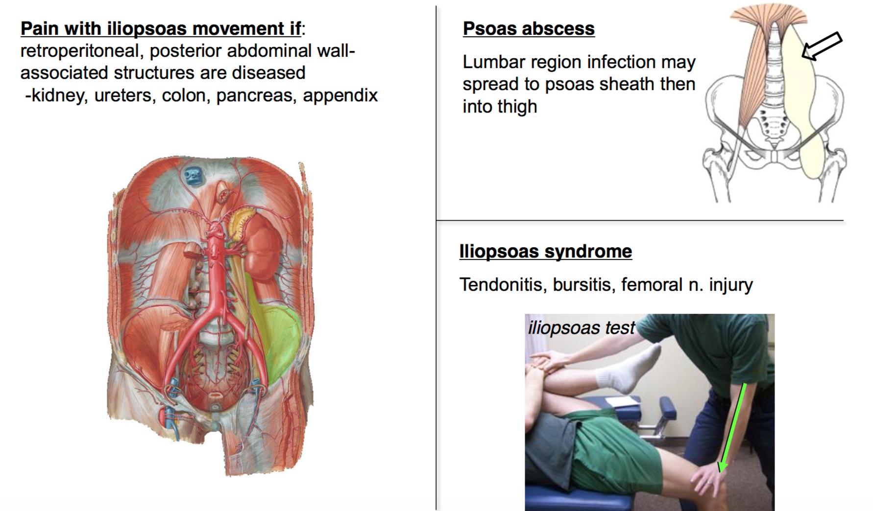 Unit 2 anatomy. Term paper Academic Writing Service gressaymjom ...