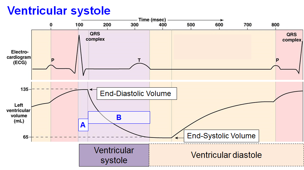4 cardiac cycle and wiggers diagram physiology i flashcards ventricular systole ccuart Gallery
