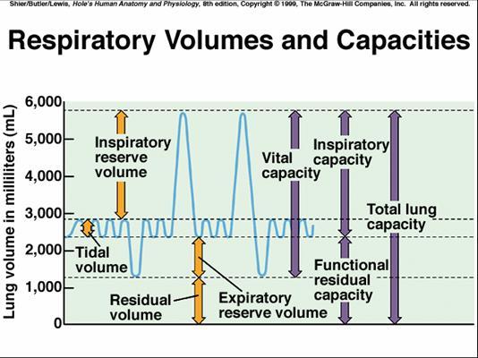 Bio cardiopulmonary msk cprmsk flashcards memorang pulmonary ventilation ccuart Images