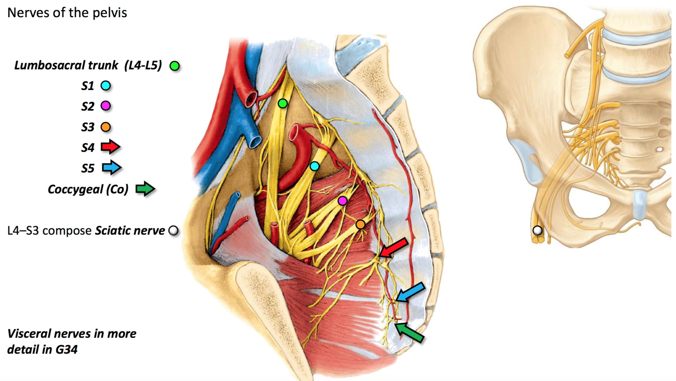 Asombroso Aris Mhhe Com Anatomy And Physiology Viñeta - Imágenes de ...