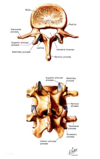 12 3 Intro To Spinal Disorders Yu Flashcards Memorang