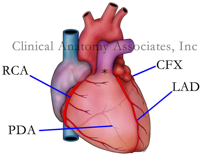 Sw Ohio Cardiacresuscitationrosc Medicine Flashcards Memorang